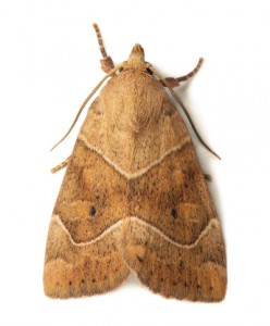 Moth Removal-Pest Control Bristol